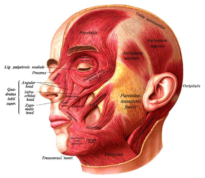 Face: Part of the body at the front of the head
