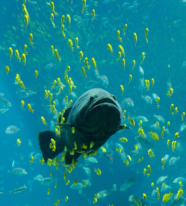 Fish: Vertebrate animal that lives in water and usually has gills
