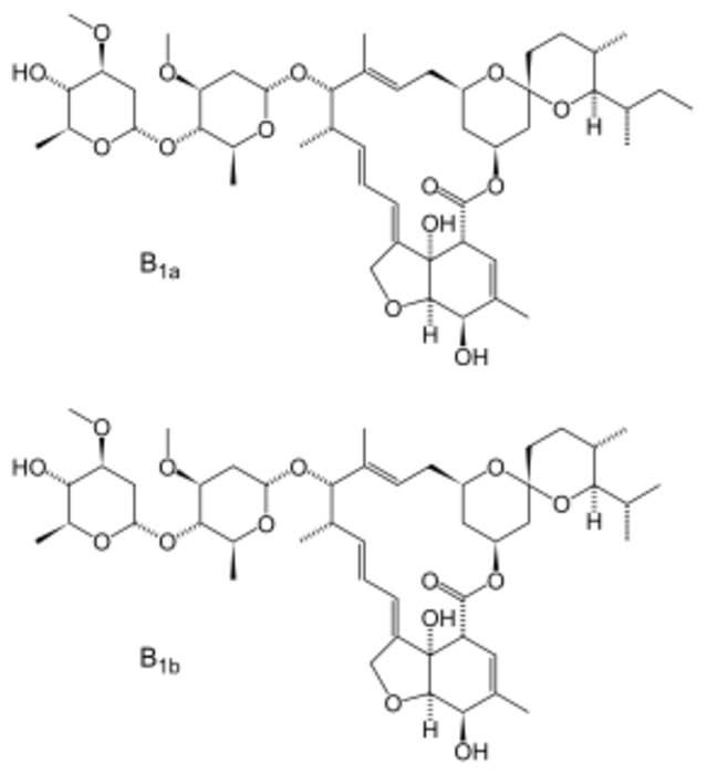 Ivermectin: Medication for parasite infestations