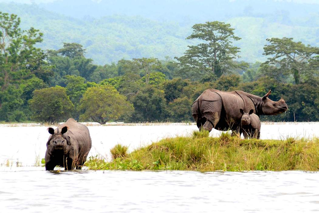 Kaziranga National Park:
