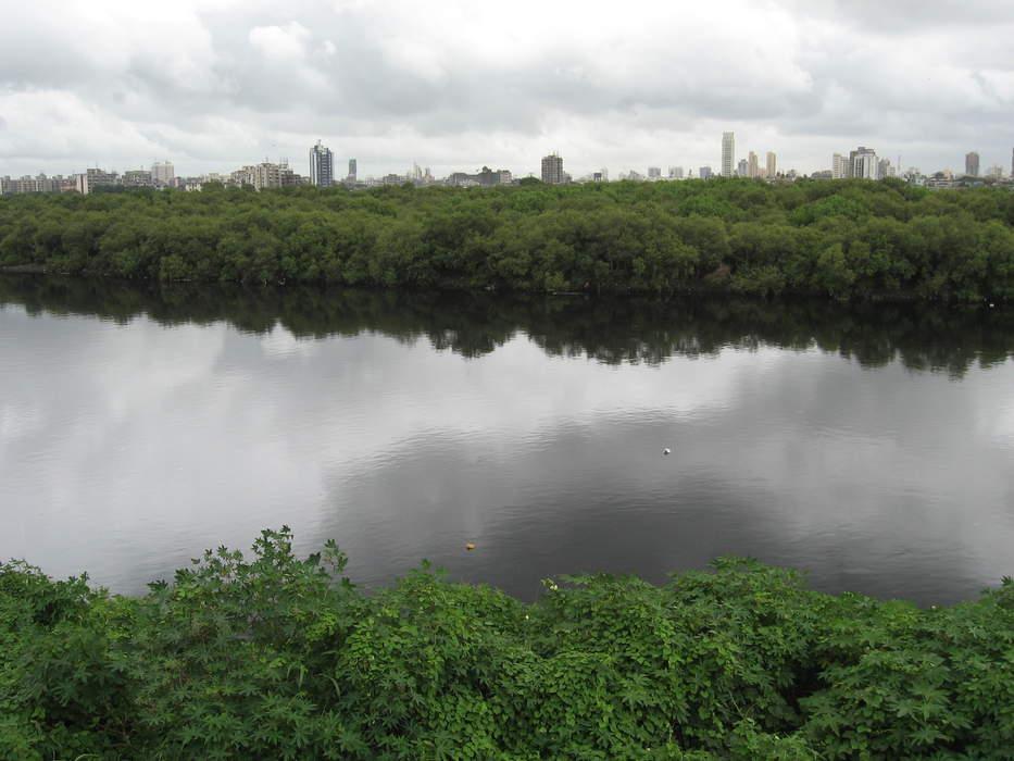 Mithi River: River in Mumbai, India